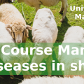 New CPD mammary diseases