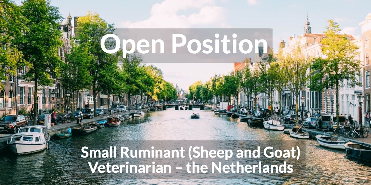 Open position – Small Ruminant (Sheep and Goat) Veterinarian – the Netherlands