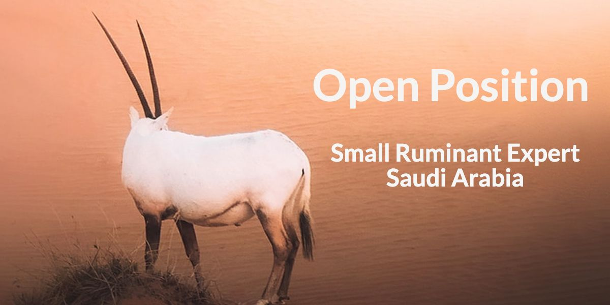 Open position – Small Ruminant (Sheep and Goat) Expert – Saudi Arabia