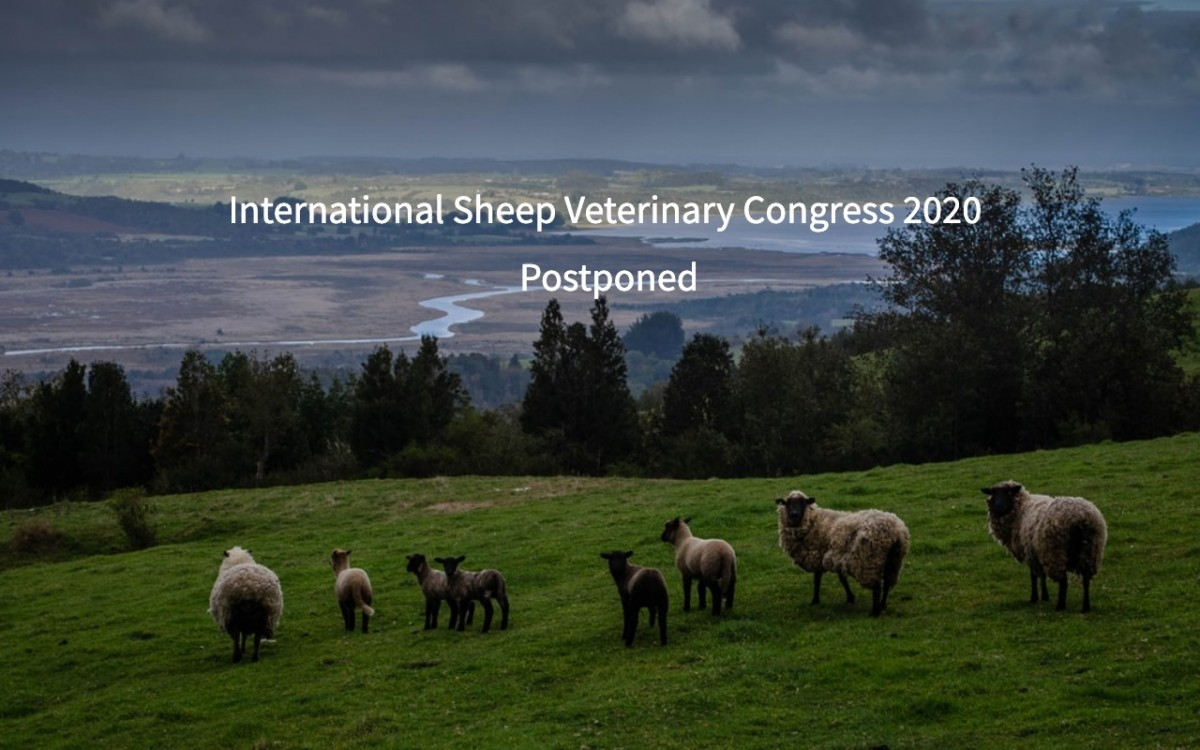 International Sheep Veterinary Congress Postponed