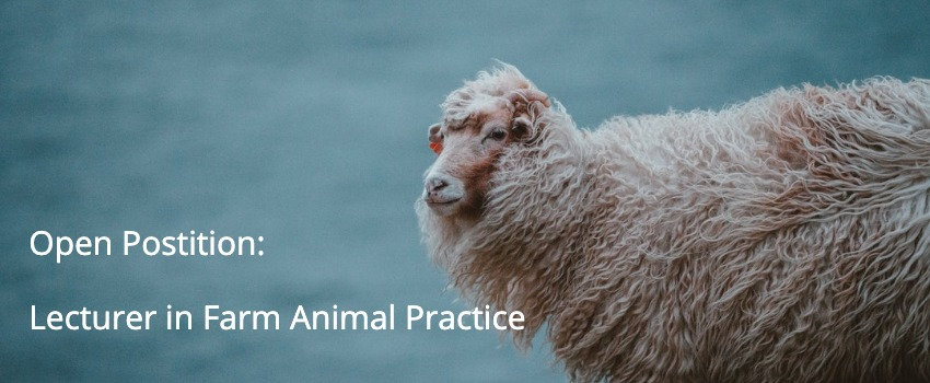Open Position: Lecturer in Farm Animal Practice