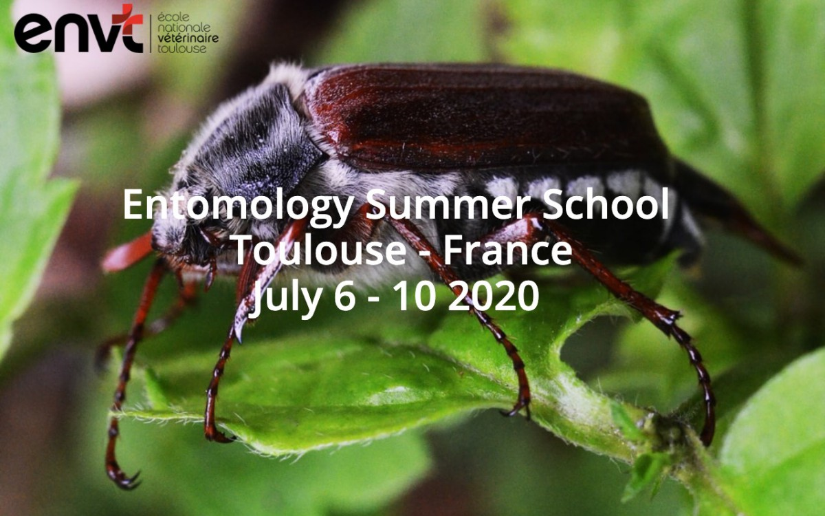 Entomology Summer Course – Toulouse – France
